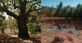 Трёхсотлетний дуб и Немое озеро исполнения желаний: легенда деревни Якобьевка