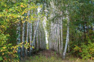 Село Нижнепечерское, Приволжский район, Самарская область